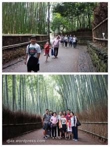 Arashiyama Bamboo Grooves